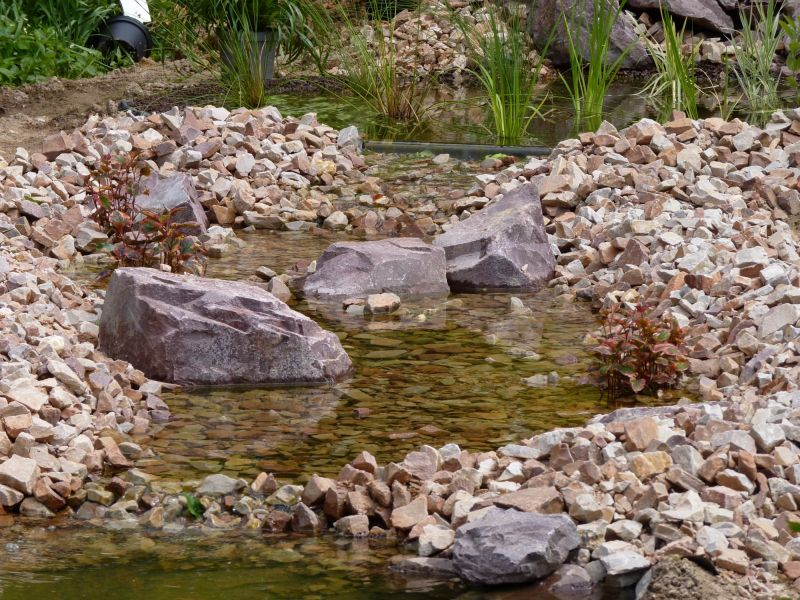 Le bassin aquatique dans votre jardin gr zieu la varenne for Bassin aquatique jardin